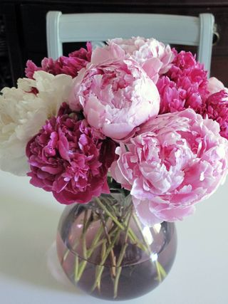 2 50 Peonies Plus Great Tips On How To Revive Wilted Flowers Nicole Gibbons Style