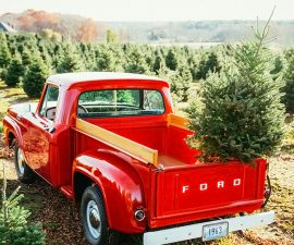 Caring for Your Live Christmas Tree Tips