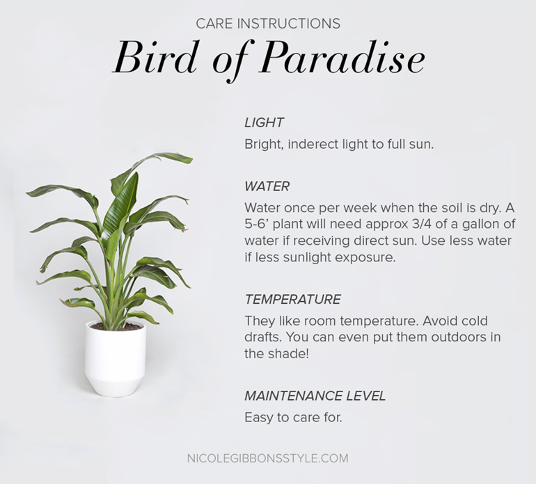 Bird of Paradise Plant Indoors Interiors Decor-10