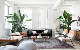Bird of Paradise Plant Indoors Interiors Decor-15