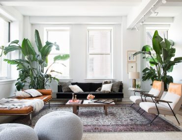 Bird of Paradise Plant Indoors Interiors Decor-15