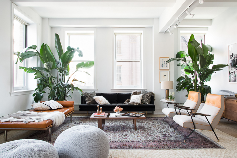 Bird Of Paradise Plant Indoors Interiors Decor 15 For The Past Several Years Fiddle Leaf Fig Tree Has Dominated